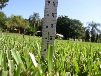 Grass-Height