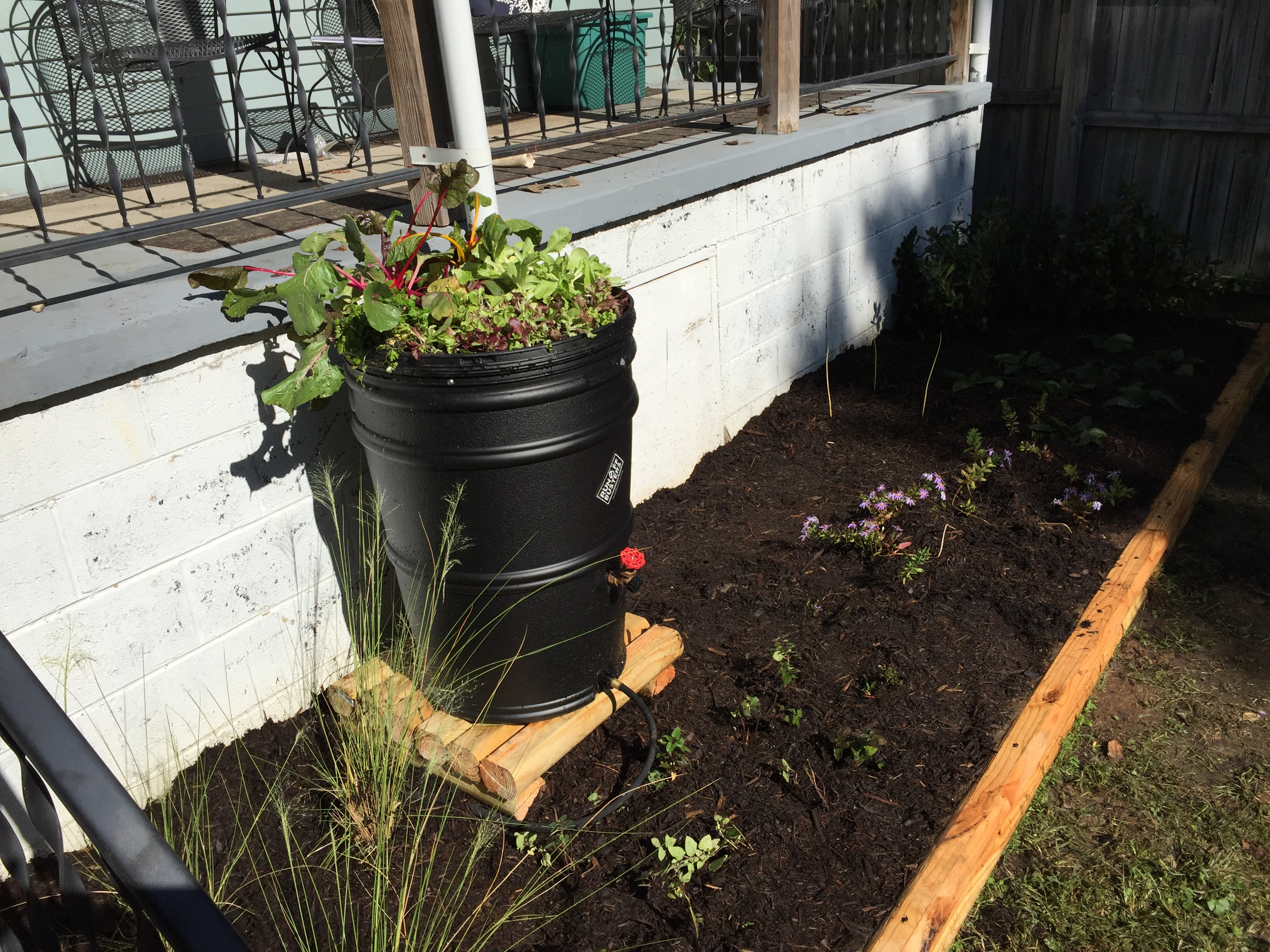 Double Duty: Consider combining a rainbarrel and an edible container