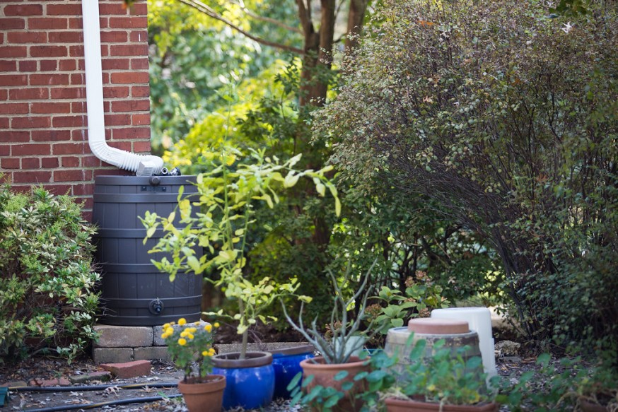 Disconnecting your downspout and rerouting it to a rain barrel keeps right in your yard to water your outdoor and house plants.